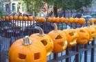 CobbleHillPumpkins1