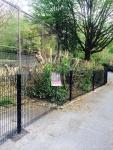 Belfast Zoo - Lion enclosure